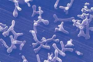 Доказательства обоснованности профилактического применения пробиотиков
