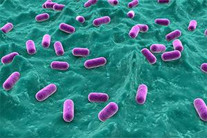 Польза для здоровья при употреблении пробиотиков